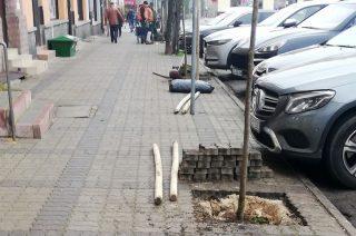 To dobra wiadomość. Przybyło kilka drzew w centrum miasta