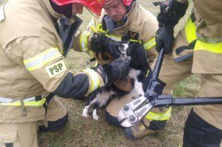 Strażacy uwolnili psa zaplątanego w druty [zobacz fot]