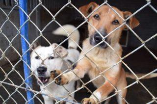 Psy z Mławy zamiast do Napierek jadą do schroniska pod Grudziądzem