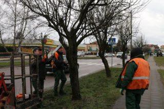 Pierwsze prace przy wiosennej konserwacji miejskiej zieleni