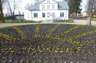 Nowe nasadzenia kwiatów w parku i przy ratuszu