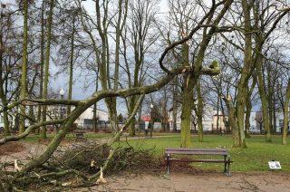 Silny wiatr odłamał konar drzewa w parku