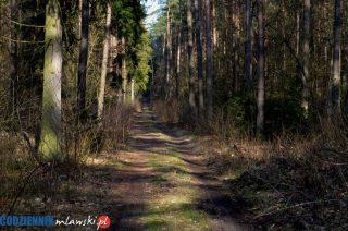Weź pieniądze i posadź las