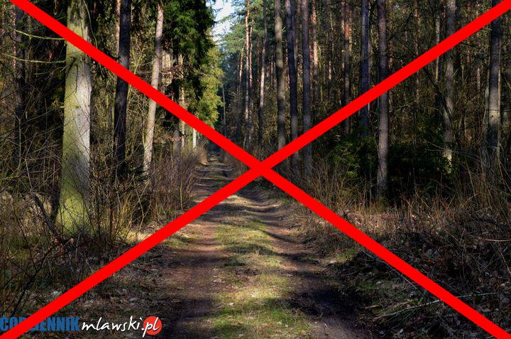 Od dziś tymczasowy zakaz wstępu do lasów i Parków Narodowych