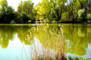 Oczka wodne, studnie czy zbiorniki wodne. ARiMR udziela wsparcia dla gospodarstw