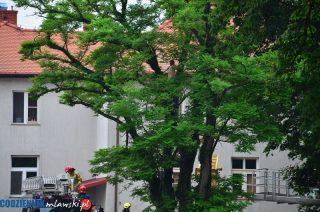 Bogurzyn. Półnagi mężczyzna na drzewie, ratowali go strażacy