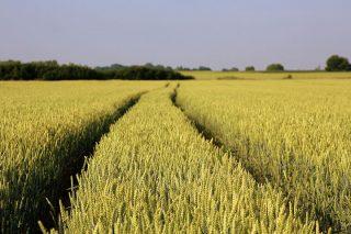 Trwa nabór wniosków o wsparcie dla rolników poszkodowanych przez COVID-19 i ubiegłoroczną suszę