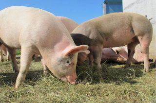 Nawet 300 tys. zł dla rolnika na odtworzenie potencjału gospodarstwa