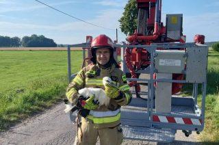 Strażacy uratowali bociana zaplątanego w sznurek na słupie energetycznym [fot.]