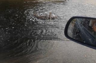 Kanalizacja deszczowa czyszczona, ale niedrożna [film]