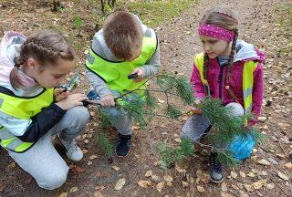 Poznajemy las. Uczniowie z SP7 w Mławie na łonie natury