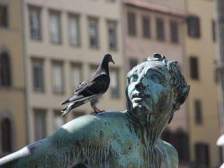 Gołębiemu sercu nie musi towarzyszyć ptasi móżdżek