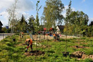 W ramach budżetu obywatelskiego zasadzą w mieście 200 drzew
