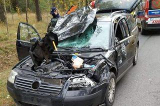 Jeleń zderzył się z passatem. Jedna osoba ranna
