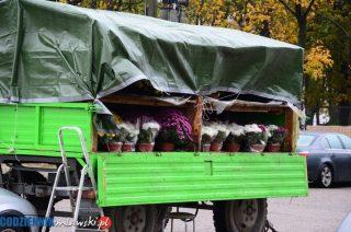 Ciechanów i Chorzele odkupiły kwiaty od sprzedawców chryzantem