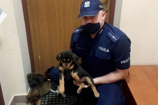 Jeszcze raz o szczeniakach wyrzuconych z auta w Pepłowie