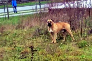 Właściciel agresywnego psa ustalony. Usłyszał zarzuty