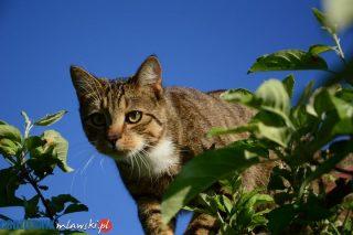 Uwaga miłośnicy zwierząt! Nowy konkurs
