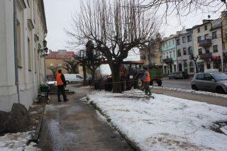 Trwa przycinanie drzew i krzewów