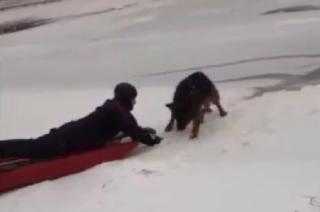 Owczarek wpadł do rzeki. Uratowali go policjanci i strażacy