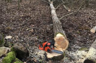 Garlino. Kobieta ranna przy ścince drzew