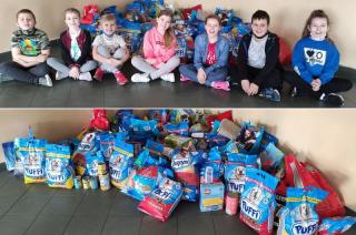 Szkolny wolontariat w SP nr 3 zebrał karmę dla psiaków