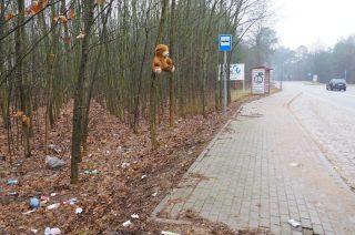 Co robił samotny miś na drzewie przy przystanku?