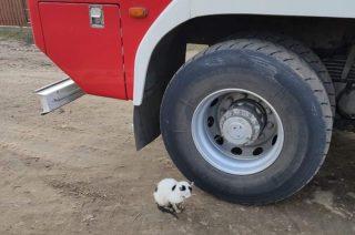 Uratowali kotka uwięzionego w studni