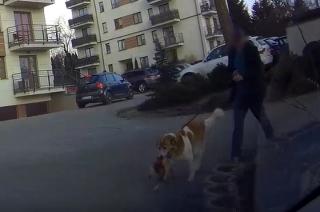 Dramatyczne sceny na jednym z osiedli. Pies zagryzł psa [Uwaga! drastyczny FILM]