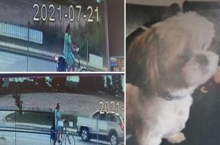 Podejrzana o kradzież psa shih tzu. Policja publikuje wizerunek
