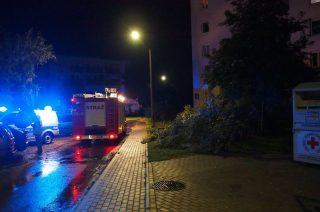 Powiat mławski. Połamane drzewa, uszkodzone auta – zagrożenia usuwali strażacy