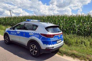 Uciekał przed policjantami w pole kukurydzy