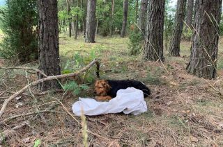 Ktoś bezduszny włożył psa do worka i porzucił w lesie!