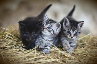 Karma i budki dla wolno żyjących kotów w Ciechanowie